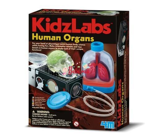 4M – Human Organs